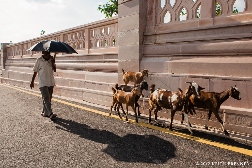 Out for a walk in Lucknow, India